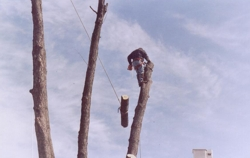 Licensed tree trimming